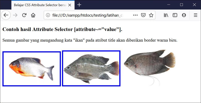 Hasil Attribute Selector ~ Value